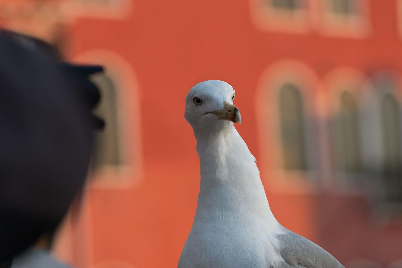 Venice Street Photography (2015)