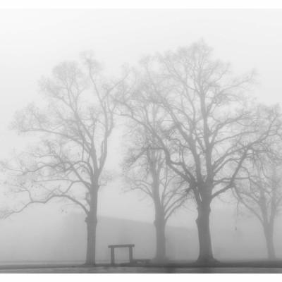 Fog & Trees on January 1