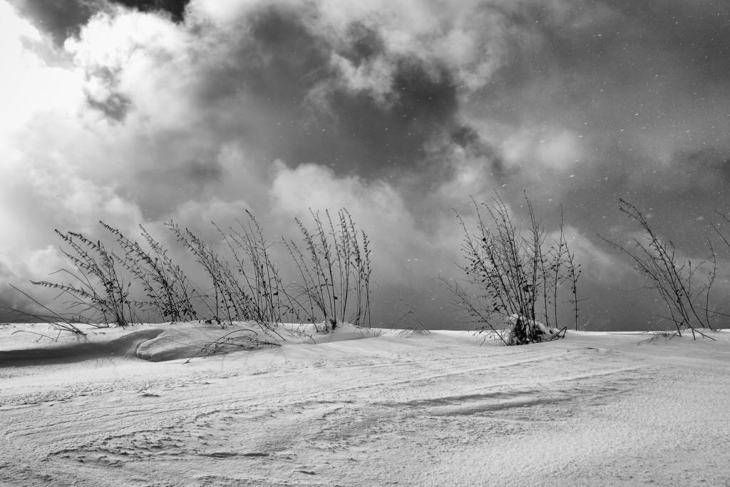 001-1090 - Nikon D810 24mm - Winter 17.1.16