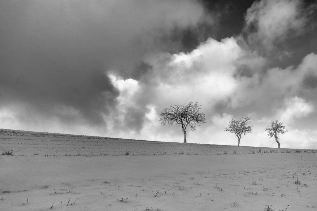 004-1090 - Nikon D810 24mm - Winter 17.1.16