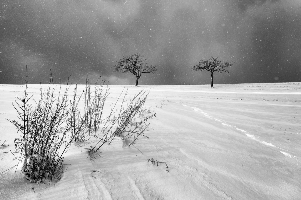 006-1090 - Nikon D810 24mm - Winter 17.1.16