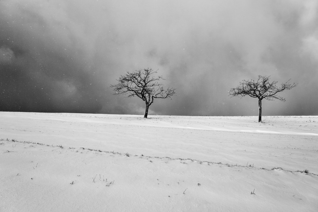 008-1090 - Nikon D810 24mm - Winter 17.1.16