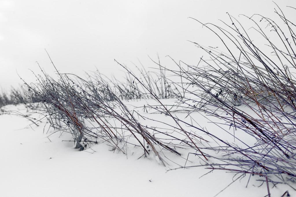 009-1090 - Nikon D810 24mm - Winter 17.1.16