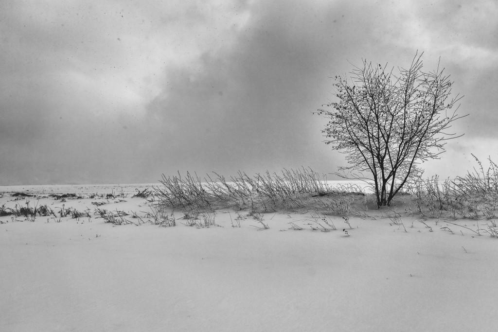 010-1090 - Nikon D810 24mm - Winter 17.1.16