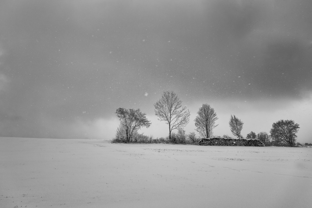 011-1090 - Nikon D810 24mm - Winter 17.1.16