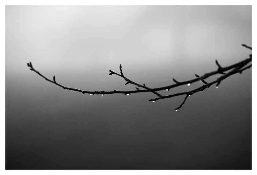 Fog and Trees January 1