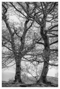 015-2016-05-05 Paul Gallagher B&W Nikon D810