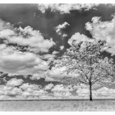 Trees in infrared and without & long exposure