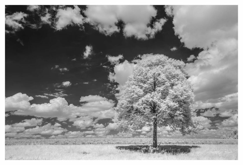 Trees in B&W infrared