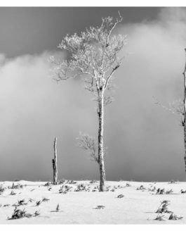 Japan Hokkaido in Winter – part 3 (trees)