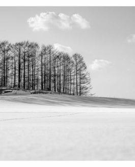 Japan Hokkaido in Winter – part 4 (more trees)
