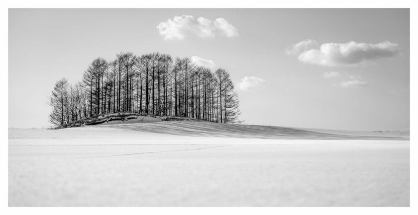 Japan Hokkaido in Winter – part 4 (more trees)