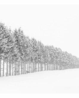 Japan Hokkaido in Winter – part 2